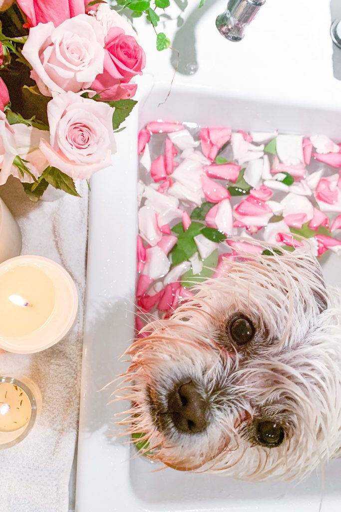 Rosewater bath for pups